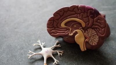 Нейрофизиологическая основа психического здоровья
